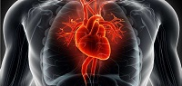 Mechanism Behind Sudden Cardiac Deaths In Sports Uncovered